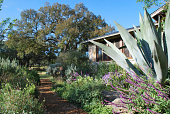 view [Diamond G. J. Ranch]: a native garden features drought-tolerant plants. digital asset: [Diamond G. J. Ranch]: a native garden features drought-tolerant plants.: 2010 Oct.