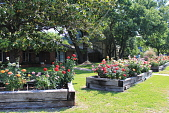 view [Pierce Garden]: the raised rose beds surround the house. digital asset: [Pierce Garden]: the raised rose beds surround the house.: 2014 May.
