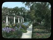 view [Chatham]: columns, perennials, trees, roses and urns. digital asset: [Chatham]: columns, perennials, trees, roses and urns.: [between 1914 and 1949?]