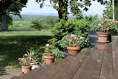 view [Redlands]: Pots of geraniums and other planted containers on the stairs to the porch. digital asset: [Redlands]: Pots of geraniums and other planted containers on the stairs to the porch.: 2018 May 8