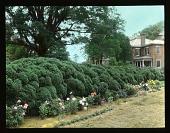 view [Upper Brandon Plantation] digital asset: [Upper Brandon Plantation]: [between 1914 and 1949?]