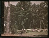 view [Archdale] digital asset: [Archdale]: [between 1914 and 1949?]
