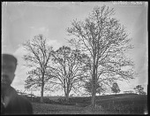 view [Welbourne]: a group of trees near a little spring at Welbourne, with an unidentified man barely visible in the left foreground. digital asset: [Welbourne] [glass negative]: a group of trees near a little spring at Welbourne, with an unidentified man barely visible in the left foreground.