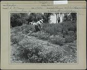 view McCreary Garden digital asset: McCreary Garden [photoprint]