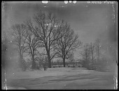 view [Miscellaneous Images in Virginia]: oaks in snow at an unidentified location. digital asset: [Miscellaneous Images in Virginia] [glass negative]: oaks in snow at an unidentified location.