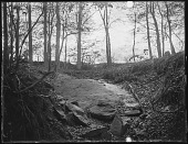 view [Miscellaneous Images in Virginia]: a rock in the woods at an unidentified location. digital asset: [Miscellaneous Images in Virginia] [glass negative]: a rock in the woods at an unidentified location.