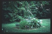 view [Grandview]: planted fountain in front of house. digital asset: [Grandview]: planted fountain in front of house.: 1998 Jul.