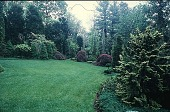 view [Carl Braun's Dwarf Conifer Garden]: perspective of property showing rare gold hemlock, Tsuga canadensis (either Lewesii or Compacta Aurea). digital asset: [Carl Braun's Dwarf Conifer Garden]: perspective of property showing rare gold hemlock, Tsuga canadensis (either Lewesii or Compacta Aurea).: 1996 May.