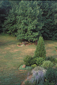 view [A Country Garden]: view of island bed and settee and only existing tree. digital asset: [A Country Garden]: view of island bed and settee and only existing tree.: 2002 Jul.