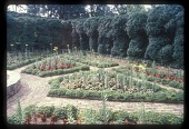view [Willow Oaks]: clipped yews form the wall around the parterre garden. digital asset: [Willow Oaks]: clipped yews form the wall around the parterre garden.: 1987 Jul.