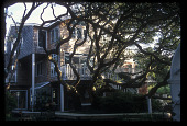 view [Meg and Bill Campbell Garden]: view of back of house and live oak tree. digital asset: [Meg and Bill Campbell Garden]: view of back of house and live oak tree.: 2009 Mar.