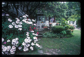 view [Meg and Bill Campbell Garden]: view of deck and backyard with hydrangea in foreground. digital asset: [Meg and Bill Campbell Garden]: view of deck and backyard with hydrangea in foreground.: 2009 Jun.