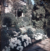 view [Warrenton Country School]: a terraced border planting next to a school building. digital asset: [Warrenton Country School]: a terraced border planting next to a school building.: [between 1915 and 1950]