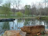 view [Springfields]: this quarry on the property provided native stone for building in the 1700s. digital asset: [Springfields]: this quarry on the property provided native stone for building in the 1700s.: 2013 Mar.