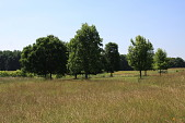 view [The Hill School Arboretum]: a circle of native trees in arboretum. digital asset: [The Hill School Arboretum]: a circle of native trees in arboretum.: 2010 Jun.