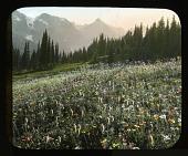 view Mount Rainier National Park digital asset: Mount Rainier National Park: 1933 Aug.