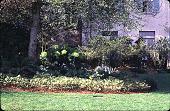 view [310]: an east view featuring Euphorbia characias subsp. wulfenii, bulbs, and Epimedium x versicolor 'Sulfureum' under Corylus 'Purpurea' (filbert). digital asset: [310]: an east view featuring Euphorbia characias subsp. wulfenii, bulbs, and Epimedium x versicolor 'Sulfureum' under Corylus 'Purpurea' (filbert).: 2000 Apr.
