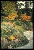 view [Miller Garden]: fall foliage color. digital asset: [Miller Garden]: fall foliage color.: ca. 1987.