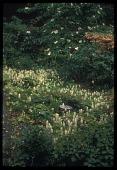 view [Miller Garden]: stumps; evergreens; travella; woodland gardens; native plants. digital asset: [Miller Garden]: stumps; evergreens; travella; woodland gardens; native plants.: ca. 1987.