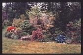 view [Agate Nursery]: rhododendron and azalea planting. digital asset: [Agate Nursery]: rhododendron and azalea planting.: 1998 May.