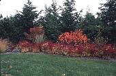 view [Hofius Garden, Sequim, Washington]: the perennial border. digital asset: [Hofius Garden, Sequim, Washington]: the perennial border.: 1998 Oct.
