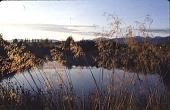 view [Hofius Garden, Sequim, Washington]: the freshwater pond. digital asset: [Hofius Garden, Sequim, Washington]: the freshwater pond.: 1998 Oct.