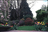 view [Helene Schoen Garden]: a variety of plant material surrounding a giant oak tree. digital asset: [Helene Schoen Garden]: a variety of plant material surrounding a giant oak tree.: 1998 May.