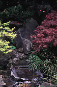 view [Helene Schoen Garden]: a Japanese water feature with two specialty Japanese maples. digital asset: [Helene Schoen Garden]: a Japanese water feature with two specialty Japanese maples.: 1998 May.