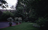 view [Bowman Garden]: lawn off circular driveway; south view of Rosa 'Seafoam' tree roses with Magnolia sprengeri 'Diva' and Rhododendron 'Beauty of Littleworth' on the right and pink Rhododendron 'Mrs. G. W. Leek' to the left of the front entrance to the h... digital asset: [Bowman Garden]: lawn off circular driveway; south view of Rosa 'Seafoam' tree roses with Magnolia sprengeri 'Diva' and Rhododendron 'Beauty of Littleworth' on the right and pink Rhododendron 'Mrs. G. W. Leek' to the left of the front entrance to the house, with hosta and Aegopodium 'Variegatum' (Bishop's weed) as the groundcover border.: [between 1997 and 1999]