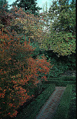 view [Bowman Garden]: boxwood garden, Fall 1999, showing Enkianthus perulatus in fall color with antique pear tree, Pyrus salicifolia 'Pendula', in background. digital asset: [Bowman Garden]: boxwood garden, Fall 1999, showing Enkianthus perulatus in fall color with antique pear tree, Pyrus salicifolia 'Pendula', in background.: 1999.