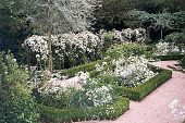 view [Bowman Garden]: the boxwood garden. digital asset: [Bowman Garden]: the boxwood garden.: 1999.