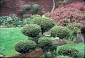 view [Greer Garden]: pruned shrubs, looking north toward brick retaining wall. digital asset: [Greer Garden]: pruned shrubs, looking north toward brick retaining wall.: 1991 May.