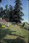 view [Topsfield]: looking north up the lawn toward large evergreen trees. digital asset: [Topsfield]: looking north up the lawn toward large evergreen trees.: 2001 Jul.