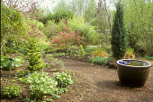 view [Froggy Bottom]: woodland garden with ceramic container of water to right. digital asset: [Froggy Bottom]: woodland garden with ceramic container of water to right.: 2005 Apr.