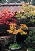 view [Welch Sanctuary]: more than 100 bonsai were kept in an enclosed garden. digital asset: [Welch Sanctuary] [slide]: more than 100 bonsai were kept in an enclosed garden.
