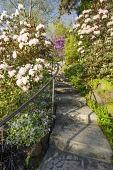 view [Green Garden]: a stairway through the upper garden of azaleas and rhododendron underplanted with forget-me-nots. digital asset: [Green Garden]: a stairway through the upper garden of azaleas and rhododendron underplanted with forget-me-nots.: 2016 Apr.
