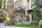 view [Green Garden]: daffodils, camellias, and budding trees in spring; an arbor over a doorway holds a climbing rose while greenery softens the retaining wall. digital asset: [Green Garden]: daffodils, camellias, and budding trees in spring; an arbor over a doorway holds a climbing rose while greenery softens the retaining wall.: 2016 Apr.