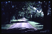 view [Allview]: View of mile long maple allee. digital asset: [Allview]: View of mile long maple allee.: 1997 Aug.