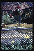 view [Christopher Place]: close-up gazebo, summer. digital asset: [Christopher Place]: close-up gazebo, summer.: 1995 Jul.