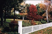 view [Tatterdemalion]: the driveway entrance in fall showing rose hips. digital asset: [Tatterdemalion]: the driveway entrance in fall showing rose hips.: 1998 Oct.