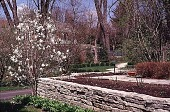 view [Tatterdemalion]: a dry stone wall, featuring a star magnolia in early spring. digital asset: [Tatterdemalion]: a dry stone wall, featuring a star magnolia in early spring.: 1997 May.