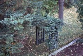 view [Tatterdemalion]: a wooden arbor supporting roses and wisteria vines. digital asset: [Tatterdemalion]: a wooden arbor supporting roses and wisteria vines.: 1998 Oct.