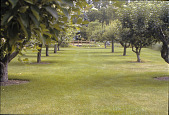 view [Windwood Garden]: historic orchard with bridge and entrance drive leading to house. digital asset: [Windwood Garden]: historic orchard with bridge and entrance drive leading to house.: 2008 Aug.