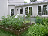 view [Homewood]: raised beds by the kitchen provide three crops of lettuce and 2 varieties of tomatoe. digital asset: [Homewood]: raised beds by the kitchen provide three crops of lettuce and 2 varieties of tomatoe.: 2005 May.