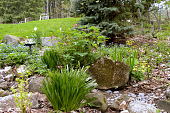 view [Little House in the Big Woods]: in summer this spring garden becomes a fairy garden. digital asset: [Little House in the Big Woods]: in summer this spring garden becomes a fairy garden.: 2013 May.