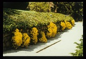 view [Thomas Garden]: driveway border. digital asset: [Thomas Garden]: driveway border.: [between 1990 and 1999]