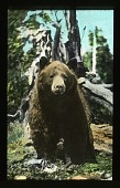view Yellowstone National Park digital asset: Yellowstone National Park: 06/01/1935