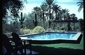 view Benton House: pool, blooming brittlebush and palms in background. digital asset: Benton House: pool, blooming brittlebush and palms in background.: 1995 Apr. 1