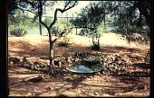 view Benton House: wildlife pool. digital asset: Benton House: wildlife pool.: 1995 Apr. 1