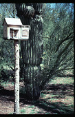 view Benton House: birdhouse in cactus garden. digital asset: Benton House: birdhouse in cactus garden.: 1995 Apr. 1